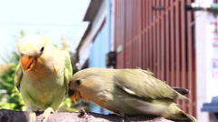 Feeding birds on branch Stock Footage