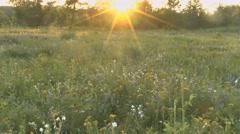 Beautiful flowers meadow field Stock Footage