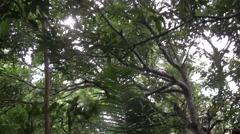 Black Crested Macaque group move in tree 2 Stock Footage