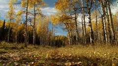View of forest in Motherwell Ranch Stock Footage