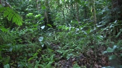 Walk through thick rainforest in search of Black Crested Macaque group Stock Footage