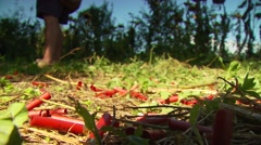 Shotgun shells in hunting ranch Stock Footage