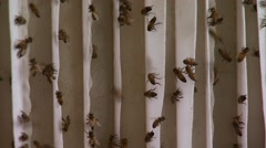 Honey bees swarming on roof - stock footage