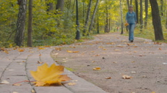 Fallen leaf lying on the road in the park Stock Footage