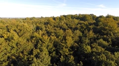 Slow flight over a beech forest in early fall Stock Footage
