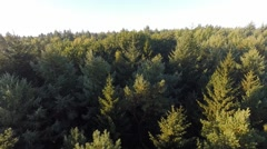 Slow low-level flight over a coniferous forest Stock Footage