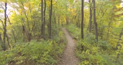 Drone flight through forest in autumn along path Stock Footage