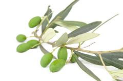 Isolated olive's branch with leaves and fruits - stock photo