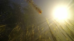 Slow motion low-angle shot of water plants with dazzling sun and waving water in Stock Footage