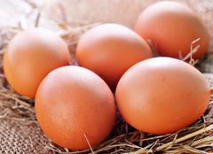 raw chicken eggs - stock photo