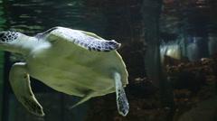 Sea turtle in the decorated Marine Aquarium. Stock Footage