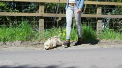Young woman taking her dog for a walk in the countryside.  Stock Footage