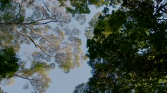 Rainforest canopy Stock Footage