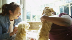 4K Couple relaxing at home with 2 playful young cocker-poo puppies. Stock Footage