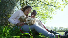4K Couple relaxing in the park with 2 cute young cocker-poo puppies Stock Footage