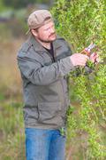 Gardener pruning the tree in his garden Stock Photos