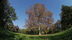 Tree with orange leaves in the park Stock Footage