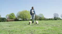 4K Young woman walking 2 cute puppies in the park.  Stock Footage