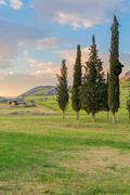 Cypress trees - stock photo