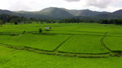 Aerial shot rice field and mountain view Stock Footage