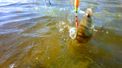 Summer perch fishing bait Stock Footage