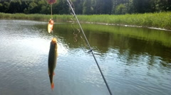 Summer lake fishing Rudd fish Stock Footage