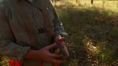 Stock Video Footage of Man holding dead quail at hunting reserve