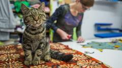 Cute cat portrait at tailor studio Stock Footage