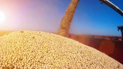 Harvested soybean - stock footage