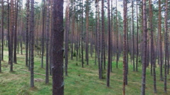 Moving Through a Pine Forest - stock footage