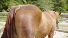 Horse buttocks with waving tail close up 4K Stock Footage