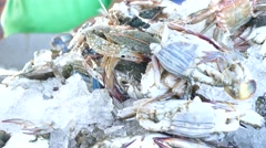 Flower crab, blue crab, blue swimmer crab Stock Footage