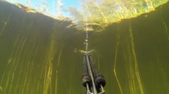 POV shot of spearfishing with a speargun in shore water with dense reed Stock Footage