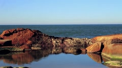 Still Rock Natural Pool in Ocean Stock Footage