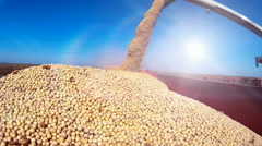 Harvested soybean Stock Footage