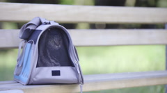 Little cat rest in carry bag on wooden bench 4K Stock Footage
