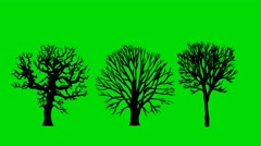 Cartoon Naked Old Dead Trees on a Green Screen Background in 4K Stock Footage