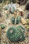 Various cacti - stock photo