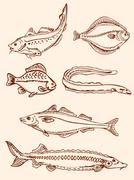 Retro saltwater fish Stock Illustration
