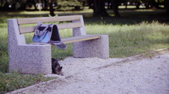 Sweet cat explores park and sniffing around bench 4K  Stock Footage