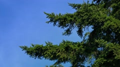 Tree Branches In Gentle Wind Stock Footage