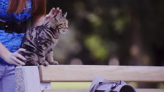 Tabby kitten sit on wooden bench 4K  Stock Footage