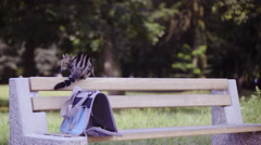 British cat sit on bench in park 4K  Stock Footage