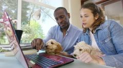 4K Couple working on laptop computer at home with 2 cute puppies Stock Footage