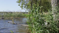 The purity of nature on the river bank - stock footage