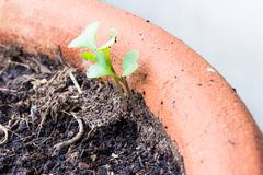 Stock Photo of small plant is growing represent to hope, start or life