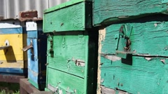 Bees fly and fly out of the hive in the apiary - stock footage