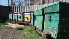 Stock Video Footage of Bees fly in a small apiary in the sunlight