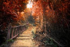 Fantasy autumn forest with path way through dense trees - stock photo