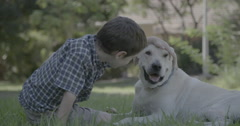 Young boy petting a big white dog - stock footage